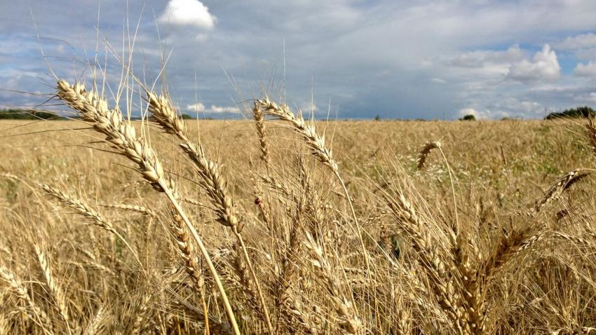 Сезонные зерновые и зернобобовые мая