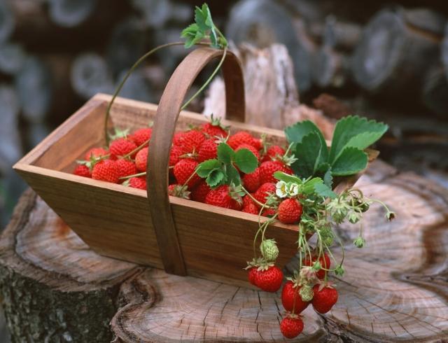 Актуальные рецепты: что приготовить из сезонных продуктов июня (овощи, фрукты, травы)