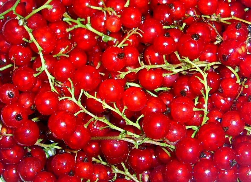 Красную смородину для рецепта можно использовать как свежую, так и замороженную